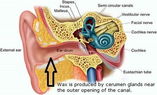 image of Ear Diagram